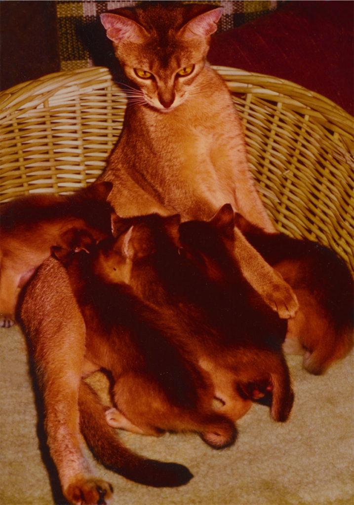Int.Ch. Wodan's Taiga- Int.Ch. Badfinger Little Puma; 23, with famous Offspring; 23-ruddy